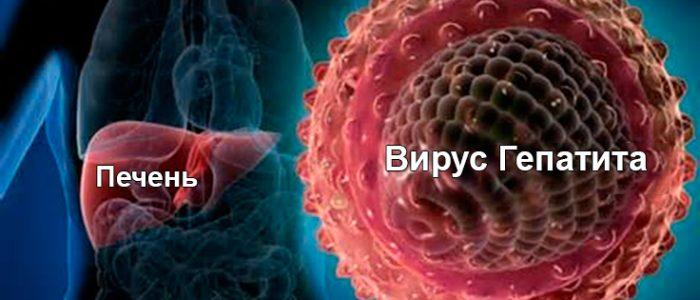 Как быстро погибает вирус гепатита с